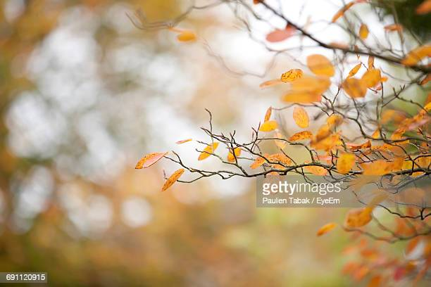 Close-Up Of Autumn Leaves Against Blurred Background