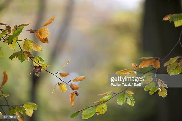 close-up of autumn leaves growing outdoors - paulien tabak foto e immagini stock