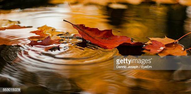 Close-Up Of Autumn Leaves In Water