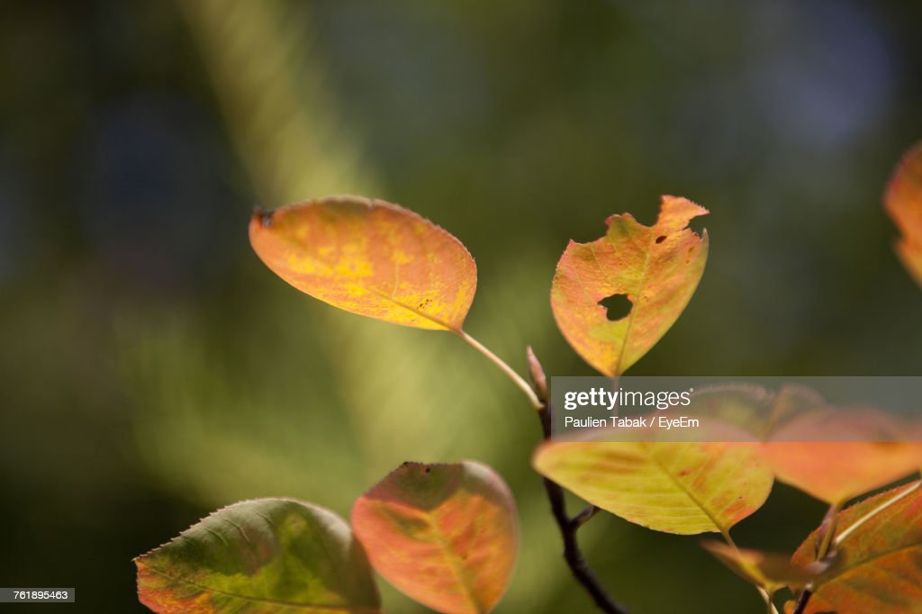 Close-Up Of Autumn Leaves In Water : Stock Photo