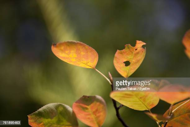 close-up of autumn leaves in water - paulien tabak foto e immagini stock