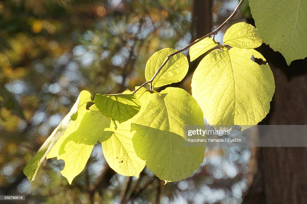 Close-Up Of Autumn Leaves On Sunny Day : Foto stock