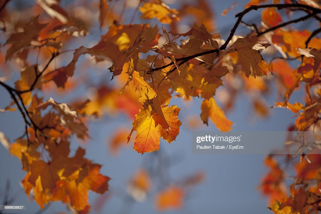 Close-Up Of Autumn Leaves On Tree : Foto stock
