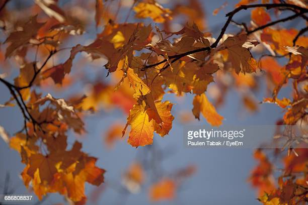 close-up of autumn leaves on tree - paulien tabak foto e immagini stock