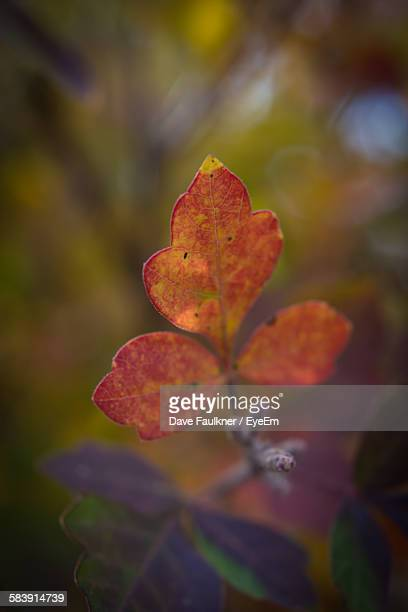 close-up of autumn leaves on twig - dave faulkner eye em stock pictures, royalty-free photos & images