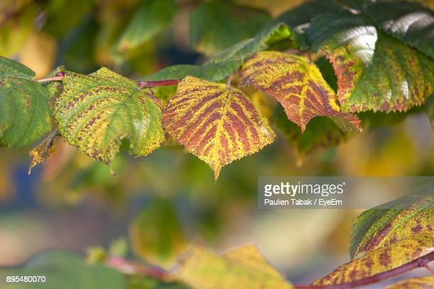 close-up of autumn leaves - paulien tabak stock pictures, royalty-free photos & images