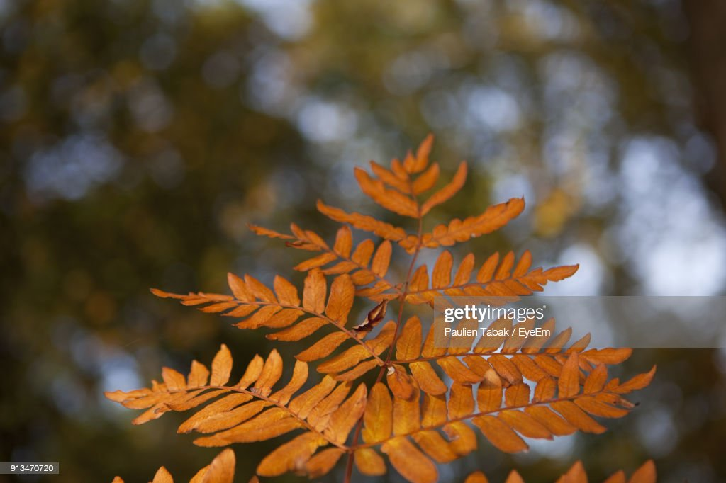 Close-Up Of Autumn Leaves : Stockfoto