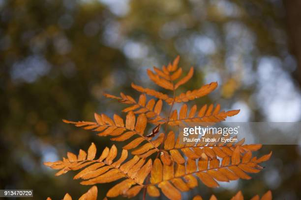 close-up of autumn leaves - paulien tabak photos et images de collection