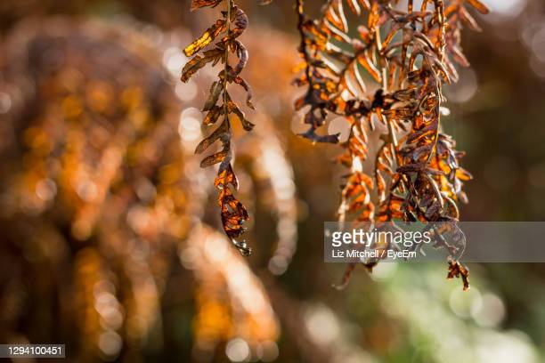 close-up of  autumn plant - leaf stock pictures, royalty-free photos & images