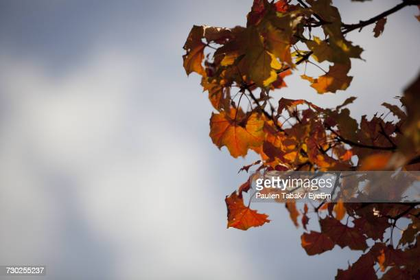 Close-Up Of Autumn Tree Against Sky