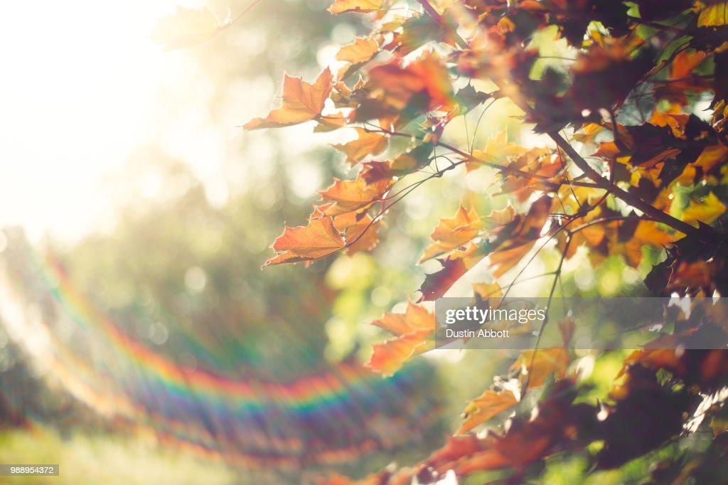 Close-up of autumn tree, Canada : Stock Photo