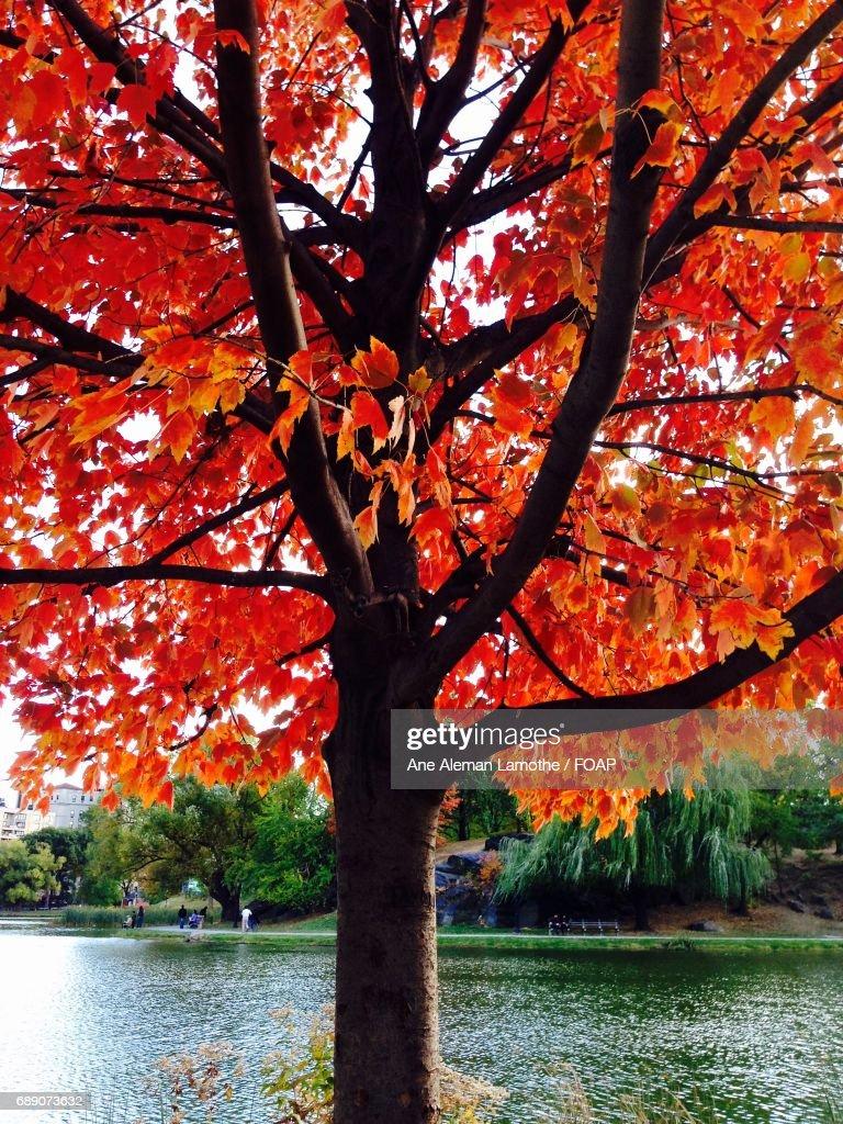 Close-up of autumn tree : Stock Photo