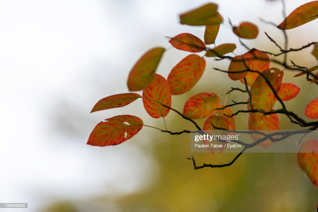 Close-Up Of Autumnal Leaves Against Blurred Background : Stockfoto