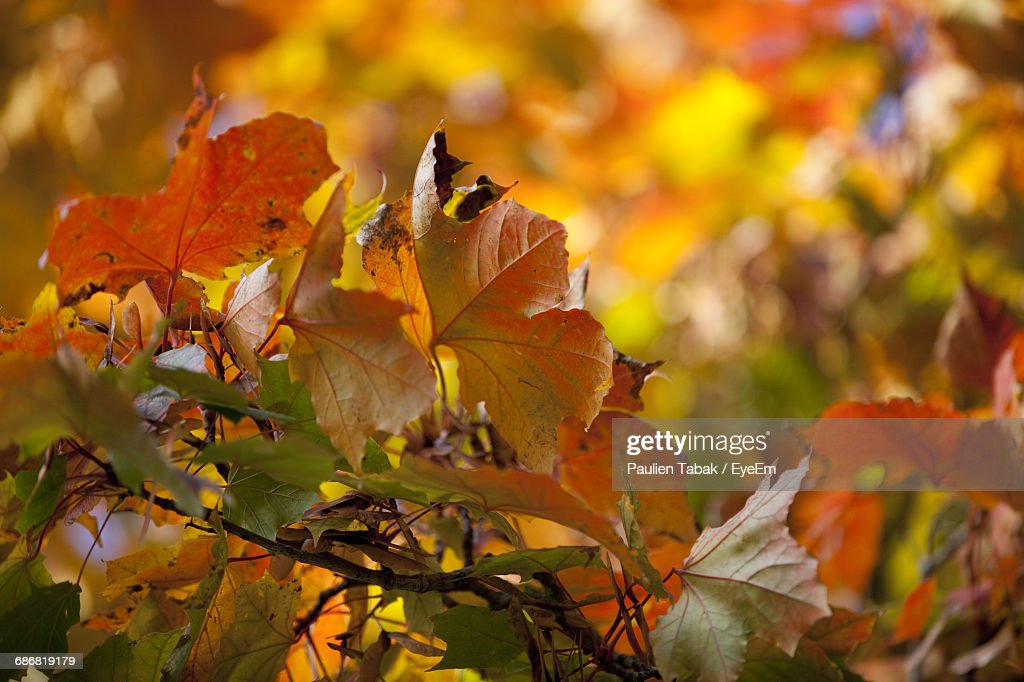 Close-Up Of Autumnal Leaves Against Blurred Background : Foto stock