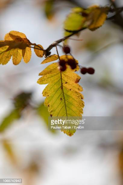 close-up of autumnal leaves - paulien tabak stock-fotos und bilder