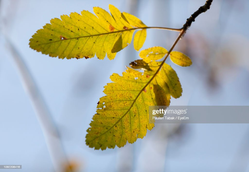 Close-Up Of Autumnal Leaves : Stockfoto