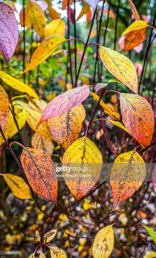Close-Up Of Autumnal Leaves : Stock Photo