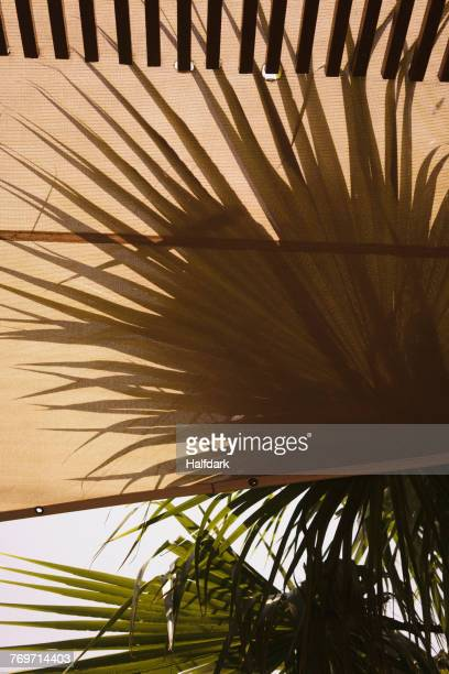Close-up of awning and palm trees against sky
