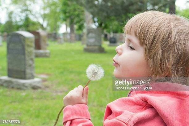 close-up of baby boy blowing dandelion at cemetery - cemetery stock pictures, royalty-free photos & images