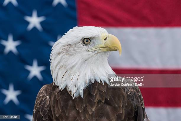 Close-Up Of Bald Eagle Against American Flag