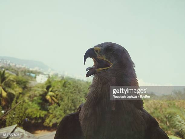 Close-Up Of Bald Eagle Against Sky Seen From Glass Window