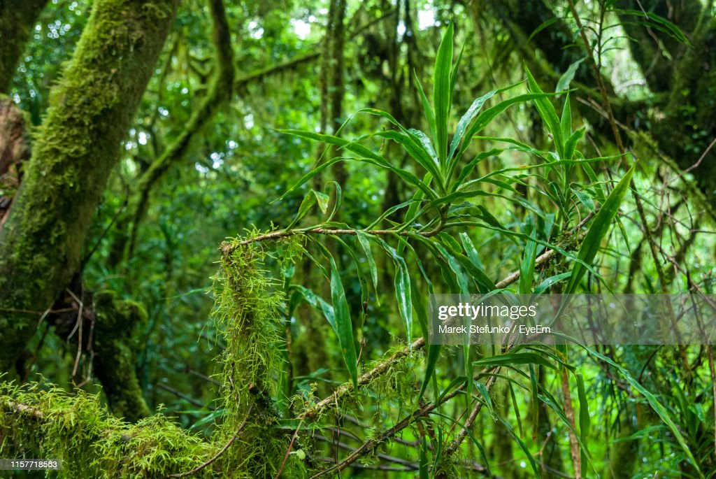 Close-Up Of Bamboo Trees In Forest : Stock Photo