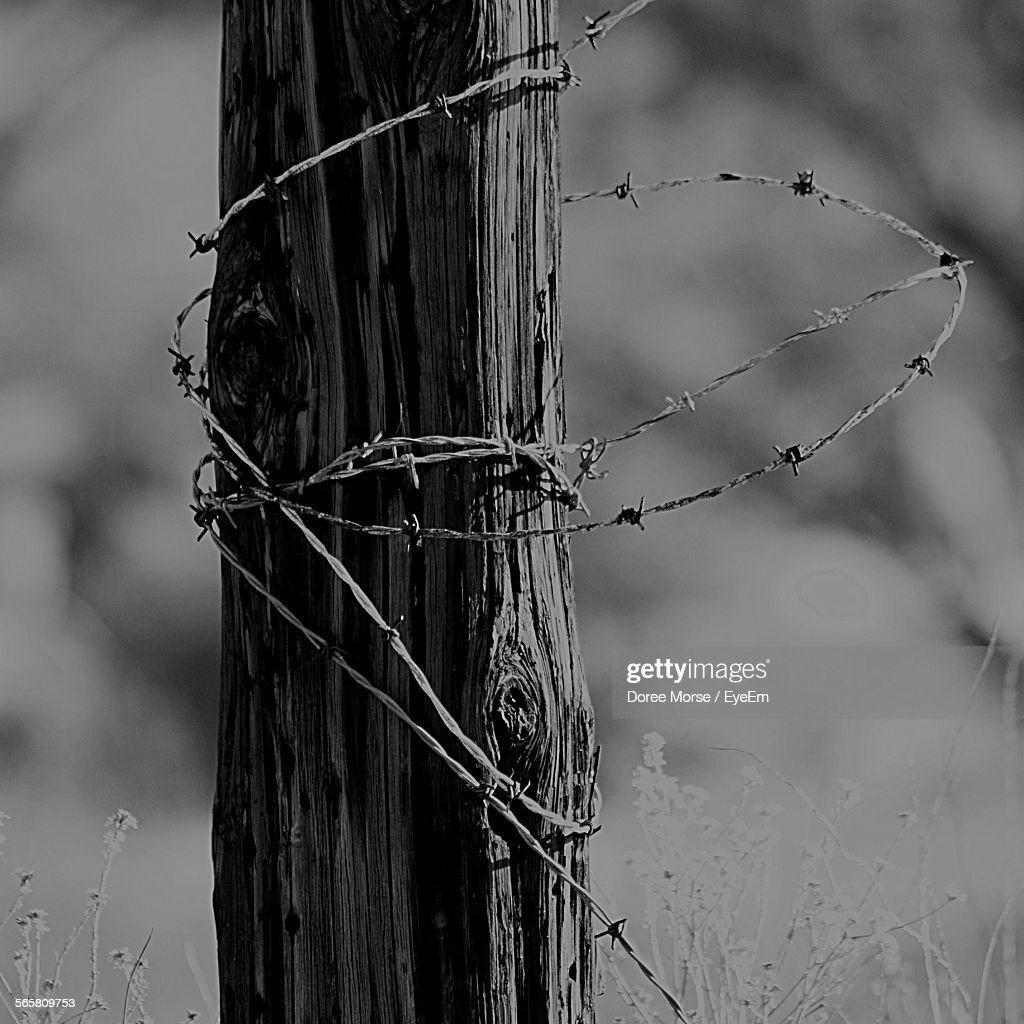 Closeup Of Barbed Wire Fence Around Tree Log Stock Photo | Getty Images