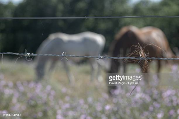 close-up of barbed wire fence on field, horses in background - ガール県 ストックフォトと画像