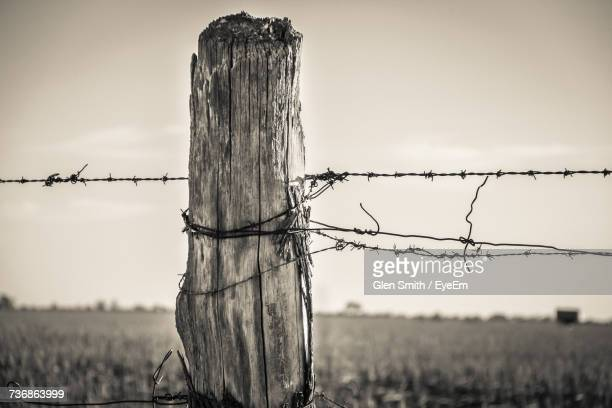 close-up of barbed wire on field against sky - barbed wire stock pictures, royalty-free photos & images