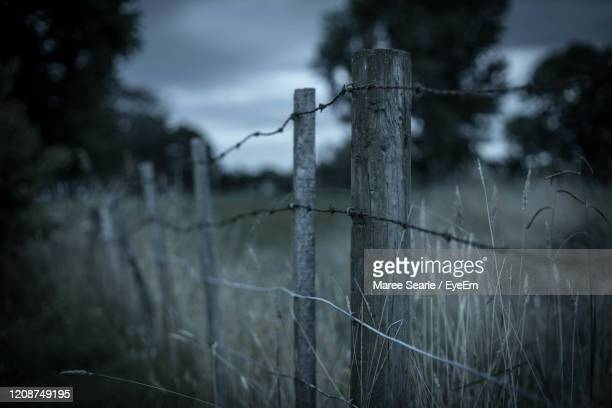 close-up of barbed wire - cambridge new zealand stock pictures, royalty-free photos & images