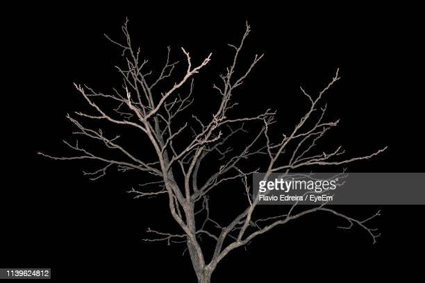 close-up of bare tree against black background - bare tree stock pictures, royalty-free photos & images