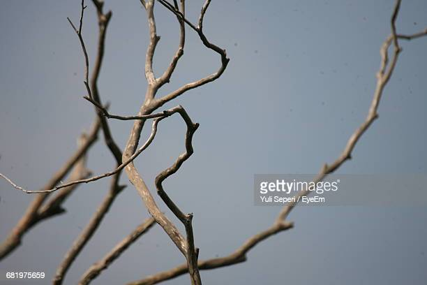 Close-Up Of Bare Tree Against Clear Sky