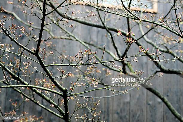 close-up of bare tree against sky - barulho stock pictures, royalty-free photos & images