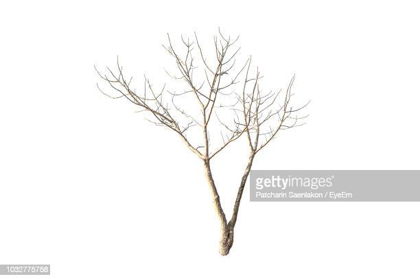 close-up of bare tree against white background - ramo parte della pianta foto e immagini stock