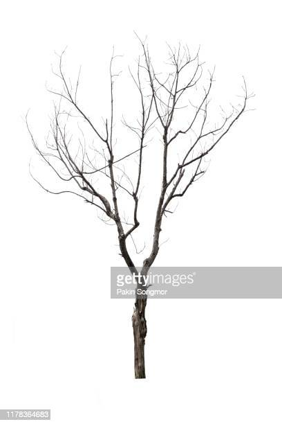 close-up of bare tree against white background - kahler baum stock-fotos und bilder