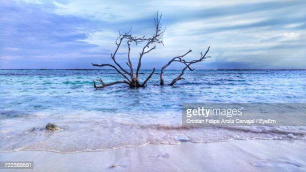 close-up of bare tree on beach against sky - carvajal ストックフォトと画像