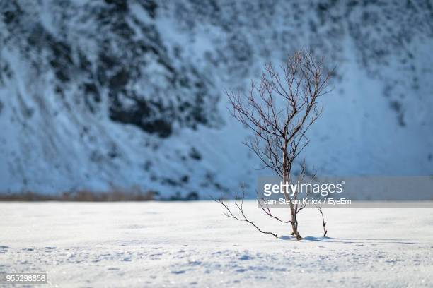Close-Up Of Bare Tree On Snow Covered Landscape