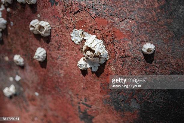 close-up of barnacles on rusty metal - barnacle stock pictures, royalty-free photos & images