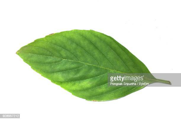 Close-Up Of Basil Leaf Against White Background
