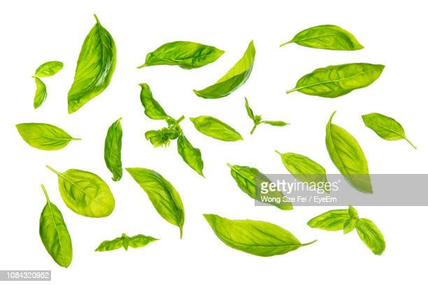 close-up of basil leaves against white background - basil stock pictures, royalty-free photos & images