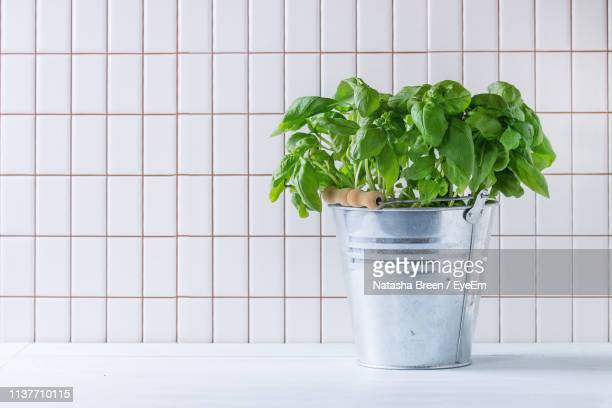 close-up of basil leaves in metal bucket on table against white tiled wall - tile stock pictures, royalty-free photos & images