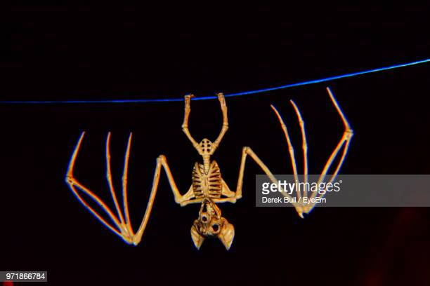 close-up of bat skeleton against black background - animal skeleton stock photos and pictures