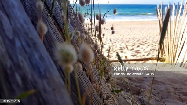 close-up of beach against sky - focus on background stock pictures, royalty-free photos & images