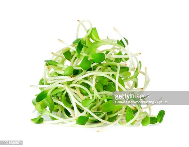 close-up of bean sprouts against white background - bean sprout stock pictures, royalty-free photos & images