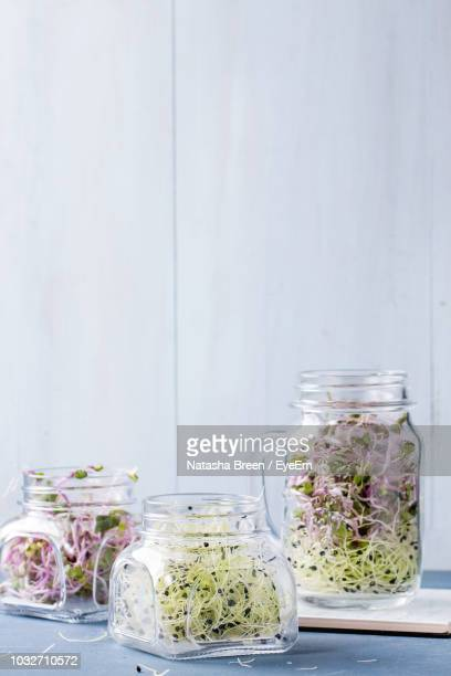 close-up of bean sprouts in jar on table against wall - bean sprout stock pictures, royalty-free photos & images