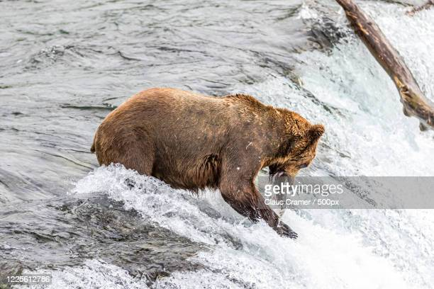 98 Dillingham Alaska Photos And Premium High Res Pictures Getty Images