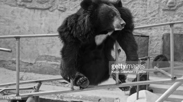60 Top Bears Rails Pictures Photos And Images Getty