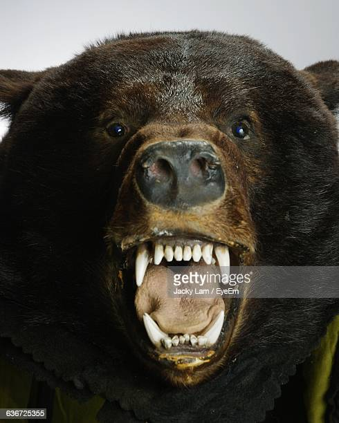 Close-Up Of Bear Taxidermy