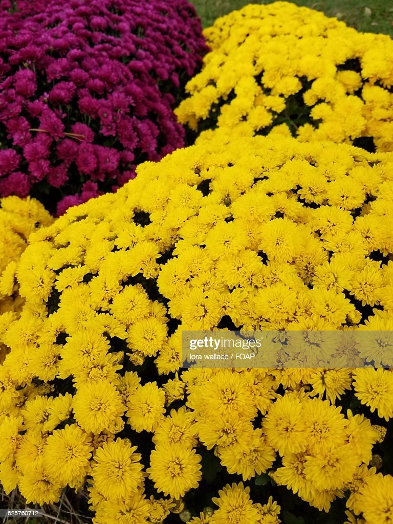 Closeup Of Beautiful Bright Flowers Stock Photo Getty Images