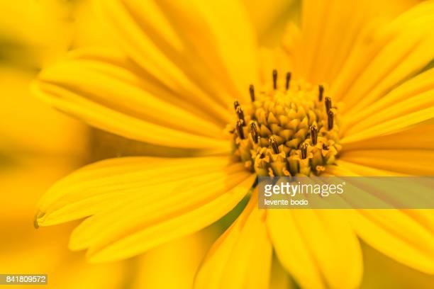 Closeup of beautiful yellow flowers in the garden